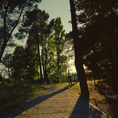 On the way back home (lebre.jaime) Tags: portugal beira covilhã jardimbotânicodemontanha botanical garden mountain tree sunset goldenhour hasselblad 503cx distagon cf4050fle analogic film120 mf mediumformat 6x6 squareformat kodak portra160 portra160120 epson v600 affinity affinityphoto
