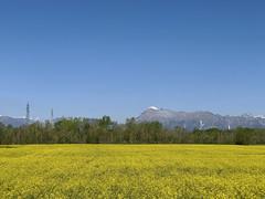 (Paolo Cozzarizza) Tags: italia friuliveneziagiulia pordenone spilimbergo panorama fiori piante alberi
