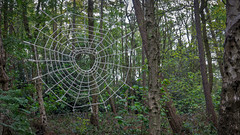 If You Go Down to the Woods Today... (Brian Negus) Tags: artspace intotheoutwoods sculpture spring theoutwoods woods leicestershire web woodland spiderweb charnwood loughboroughartspace art instrallation tree