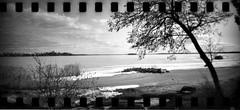Beach in April (Foide) Tags: sprocket beach tree sky ice