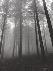 Every time there is Fog, I am out and about with my Camera (Rafael_Santos_7) Tags: forest fog tree nature mist mystery woodland spooky autumn outdoors landscape magic season lightnaturalphenomenon morning leaf branch horror dark scenics portugal caramulo