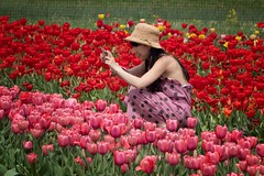 photographing tulips (ABWphoto!) Tags: usa virginia tourist touristdestination flowers flora tulips blooming woman onewoman photographing petals colorful cultural outdoors park