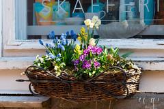 Flowers (JarkkoS) Tags: 70200mmf28efledvr d500 finland flower flowers kukka porvoo tc17eii uusimaa