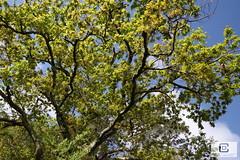 Lège-Cap-Ferret : Le Four (damzed) Tags: pentaxk1ii pentaxdfa2470 aquitaine nouvelleaquitaine gironde lègecapferret lefour règnevégétal vert bassindarcachon
