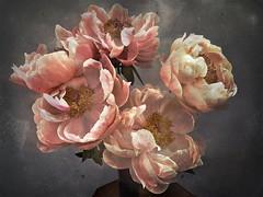 Extravagant bouquet (lydiacassatt) Tags: hipstamatic