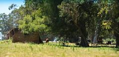 Rinconcito (Eduardo Amorim) Tags: tapera rancho house maison hut campo field champ cielo céu sky nubes nuvens clouds nuages castillos rocha uruguay uruguai pampa campanha fronteira sudamérica südamerika suramérica américadosul southamerica amériquedusud americameridionale américadelsur americadelsud eduardoamorim cuchillas pampauruguaya campaña campañauruguaya árvore arbol tree arbre albero baum árvores arboles trees arbres alberi bäume
