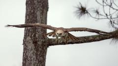 bird (sandilesmana28) Tags: