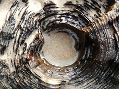 Wooden post worn by the sea (lou_wag) Tags: closeup sand abstract beach eroded wooden woodgrain