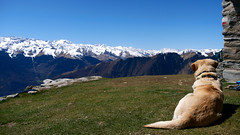 Sentinel (An Arzhig) Tags: dog chien nature paysage landscape montagne montagnes mountain mountains trek trekking pyrénées haute garonne occitanie france panasonic lumix gx800 micro 43 animal