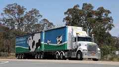 Devondale MACKs (1/2) (Jungle Jack Movements (ferroequinologist)) Tags: mfl maxwells freight lines freightlines mack bulldog superliner devondale cream dairy binalong nsw new south wales australia hume highway hp horsepower big rig haul haulage cabover trucker drive transport carry delivery bulk lorry hgv wagon road nose semi trailer deliver cargo interstate articulated vehicle load freighter ship move roll motor engine power teamster truck tractor prime mover diesel injected driver cab cabin loud rumble beast wheel exhaust double b grunt bowning
