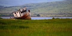 Ship to nowhere (gcquinn) Tags: 2019 flower geoff geoffrey quinn walk california usa pointreyes fishing fishingboat boat hulk wreck