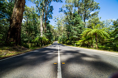 Fern Road (Jared Beaney) Tags: canon6d canon australia australian photography photographer melbourne victoria travel healesville narbethong blackspur forest drive road yarraranges dandenongs mountains hills