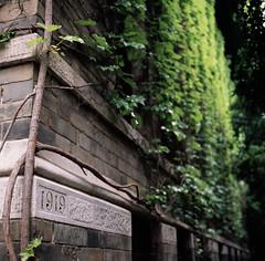 Old building and Boston ivy (Dongfei Ma) Tags: analog film landscape eave spring nanjing nanjinguniversity 6x6 reversal rdp3 provia