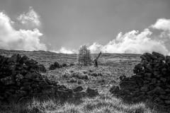DogWalker (Tony Tooth) Tags: nikon d7100 nikkor 35mm f18g moors moorland heath wall walker dogwalker bw blackandwhite hdr monochrome buxton derbyshire