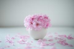 (minato) Tags: sakura 5d distagon home flower