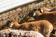 """Newham Grange Farm at Easter • <a style=""""font-size:0.8em;"""" href=""""http://www.flickr.com/photos/156364415@N06/40766470233/"""" target=""""_blank"""">View on Flickr</a>"""