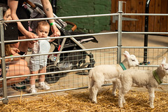 "Newham Grange Farm at Easter • <a style=""font-size:0.8em;"" href=""http://www.flickr.com/photos/156364415@N06/40766488323/"" target=""_blank"">View on Flickr</a>"