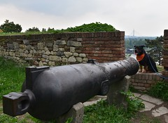 Belgrade Fortress (dinapunk) Tags: belgrade fortress serbia dog pet animal rottweiler wall history museum