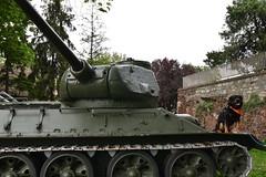 Belgrade Fortress (dinapunk) Tags: belgrade fortress serbia tank weapon wwii dog pet animal rottweiler