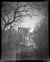 Toward Crane Beach (LowerDarnley) Tags: churchiesofficialspycamera plasticcamera toycamera 127film ipswich ma cranebeach path figure walking trees baretrees lightleaks