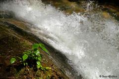 New life (Ivan Gualtieri) Tags: stream torrent torrente acqua piogge vegetazione vegetation vita nuova new life