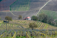 Vineyards of Oltrepo Pavese in April (clodio61) Tags: april europe italy lombardy oltrepopavese pavia agriculture color country day farm field green hill house land landscape nature outdoor photography plant road rural scenic spring springtime sunny vine vineyard
