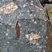 Clast-rich impact pseudotachylite (Sudbury Breccia, Paleoproterozoic, 1.85 Ga; Windy Lake Northwest roadcut, Sudbury Impact Structure, Ontario, Canada) 32