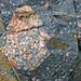 Clast-rich impact pseudotachylite (Sudbury Breccia, Paleoproterozoic, 1.85 Ga; Windy Lake Northwest roadcut, Sudbury Impact Structure, Ontario, Canada) 39