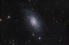 Galaxy NGC2403 (Astrolights.de) Tags: galaxy ngc2403 astrophotography astro asi183 camelopardalis zwoasi183mmpro