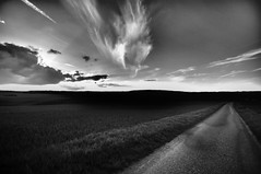 road (Franck gallery) Tags: road route wet humide clouds nuages ciel sky coutryland campagne blackwhite noirblanc d90
