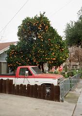 Santa Clara, California (bior) Tags: fujicahalf halfframe santaclara truck driveway pickuptruck residential suburbs kodakgold kodakfilm ford f250 orangetree gold200
