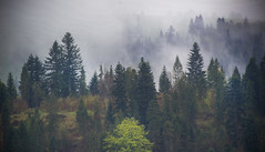 Steamy forest and hills. (Carl Terlak) Tags: lens sony sigma nex6 carpathia mountains