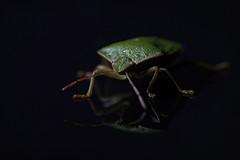 365 - Image 120 - Shield bug... (Gary Neville) Tags: 365 365images 6th365 photoaday 2019 sony sonycybershotrx100vi rx100vi vi garyneville