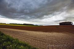 Champs sous un nuage (louis.labbez) Tags: 2019 59 france labbez nature nuage paysage sky nord campagne champs ciel cloud colza fleur flower jaune noir hautsdefrance