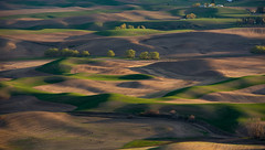 The View From Steptoe Butte (Mark Polson) Tags: palouse steptoe steptoebutte wa washington goldenhour evening spring wheat shadows mounds curves