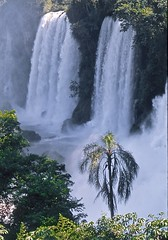 Coconut Palm with Waterfall (vincenzooli) Tags: fujiprovia southamerica waterfalls nikonf6 film