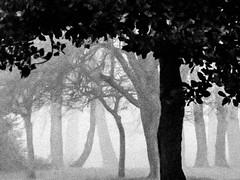 Local Park (stephenbryan825) Tags: merseyside woolton art branches dramaticlight fog foggy haze leaves mist moody morning trees trunks