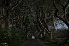 Dark Hedges (Sphotino71) Tags: darkhedges atrim irlanda ireland trees