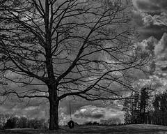 Waiting For a Friend (Chad Straw Images) Tags: farm cloudy clouds tree tireswing swing farmland gloomy blackandwhite blackandwhitephotography bw massachusetts marlboroughmassachusetts newengland nikon nikond610 landscape landscapephotography landscapes travel travelphotography monochrome moody lonely sad
