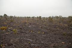 Mauna Ulu, Kilauea, Hawaii Volcanoes National Park, Hawaii (Roger Gerbig) Tags: maunaulu hawaiivolcanoesnationalpark kilauea volcano hawaii bigisland island rogergerbig canoneos5dmarkii canonef24105mmf4lisusm 3304