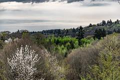 21-Pour certains arbres c'est encore l'hiver (Alain COSTE) Tags: 2019 forêt hautevienne lavarache limousin nikon ocb printemps randonnée eymoutiers france