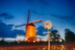 The Aurora Windmill (metsemakers) Tags: aurora molen windmill windmolen limburg baexem leudal sony a7ii tamron