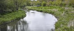 River Avon, Upstream (stevedewey2000) Tags: salisburyplain wiltshire landscape 2351 widescreen river riverscape riveravon sigmadp2 merrill fifield coombe