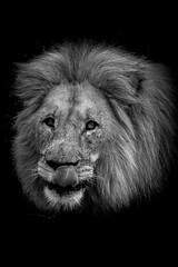 Lion lick (GaryAChurch123) Tags: lips lick tongue southafrica africa blackandwhite canon shamwari safari bw lightroom edited lion