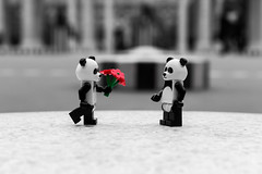 Panda Love (2016) #TBT (Ballou34) Tags: 2016 650d afol ballou34 canon eos eos650d flickr lego legographer legography minifigures photography rebelt4i stuckinplastic t4i toy toyphotography toys rebel stuck in plastic love panda flowers black white
