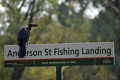 Anderson Street Fishing Landing (SteveInLeighton's Photos) Tags: 2019 nikond3300 australia melbourne bird river victoria yarra cormorant sign march travel