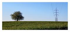 ARBOLES OPUESTOS / OPPOSITE TREES (Luis kBAU) Tags: arboles trees natural artificial madera hierro campo field