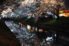cherryb19488 (tanayan) Tags: cherry blossoms sakura flower night view nikon d90 aichi japan 桜 さくら 愛知 日本 oguchi gojyo river 大口 五条川 bank