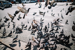 Streets of Myanmar (desomnis) Tags: street streetphotography pigeons doves birds urban animals city flying tauben 35mm sigma35mm sigma35mmf14dghsmart sigma35mmf14 sigma35mmf14art sigma 5d canon5dmarkiv canon5d canon desomnis yangon myanmar asia southeastasia burma rangun
