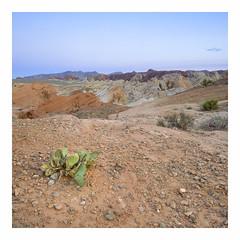 Valley of Fire - Fuji Velvia 50 (magnus.joensson) Tags: usa nevada valley fire state park hasselblad 500cm zeiss distagon fle cf 50mm fuji fujifilm velvia 50 desert outdoor landscape canyon e6 medium format